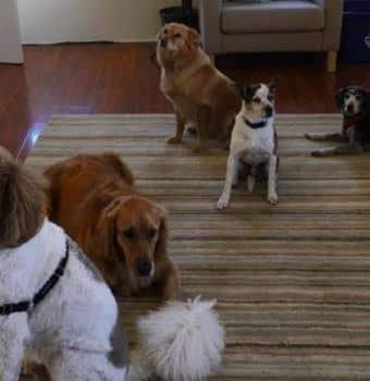 Meet the Staff Dogs!