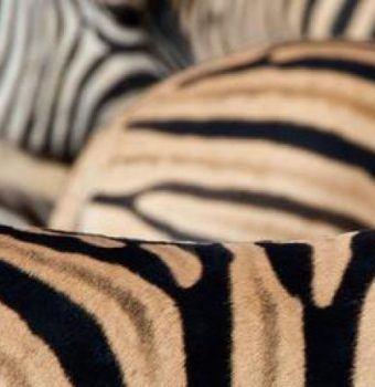 Wildlife Artwork Proceeds to Benefit WCN