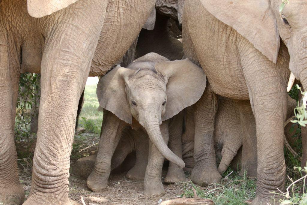 Jillian Knox_elephant_291-fullsizeoutput_a5bf