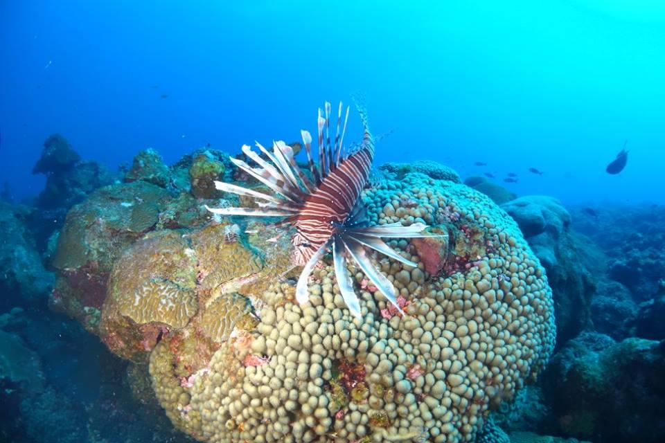 Rachel Graham_marine life_lionfish