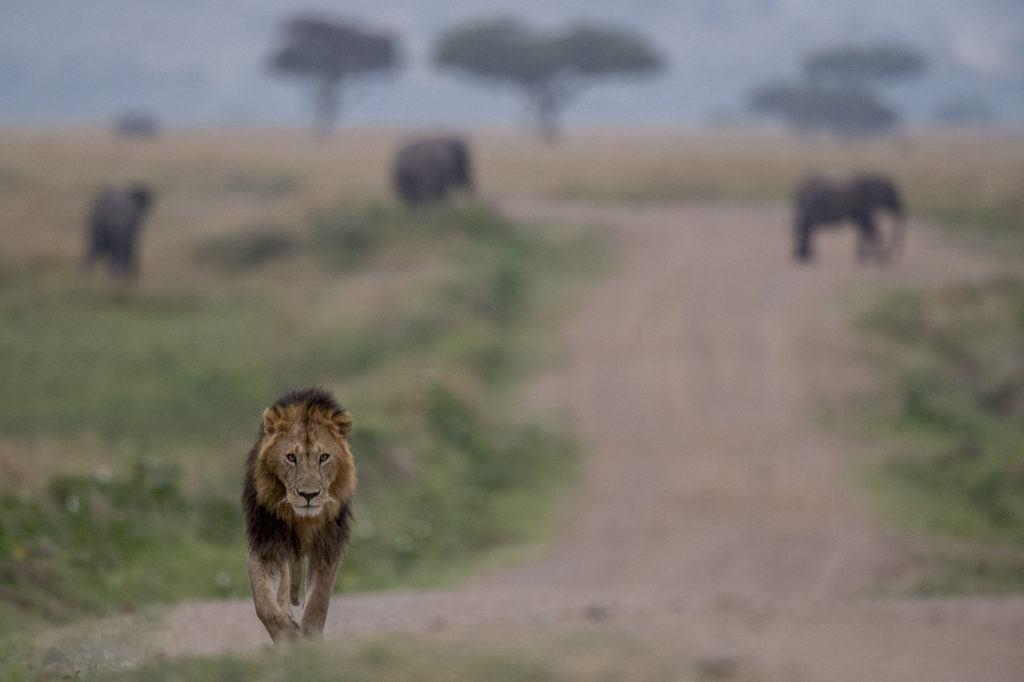 masai-mara-20140704-055-_DSC3734