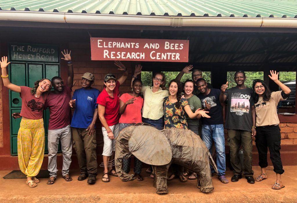 Elephants & Bees Team - Jan 2019