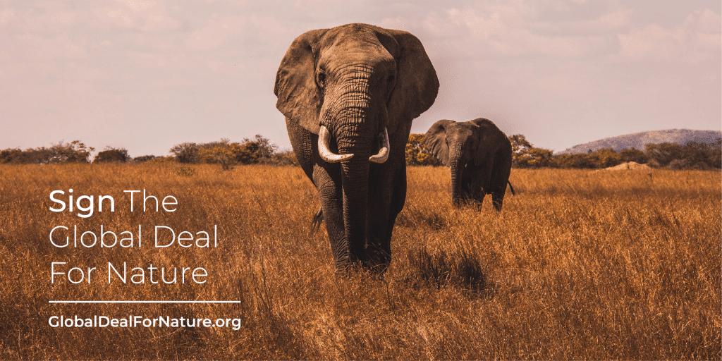 Karl Burkart - Global Deal for Nature