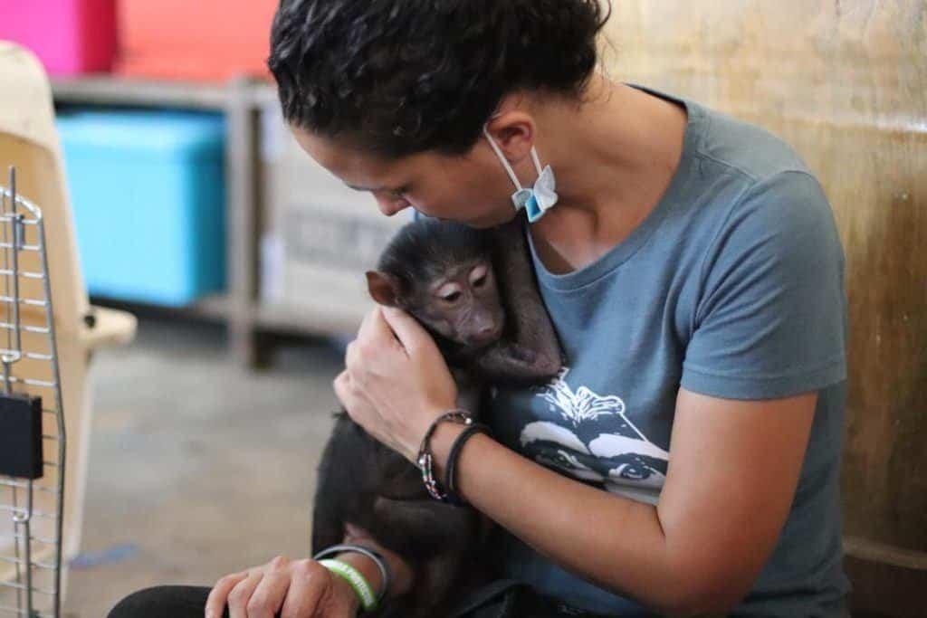 Lwiro Primate Sanctuary