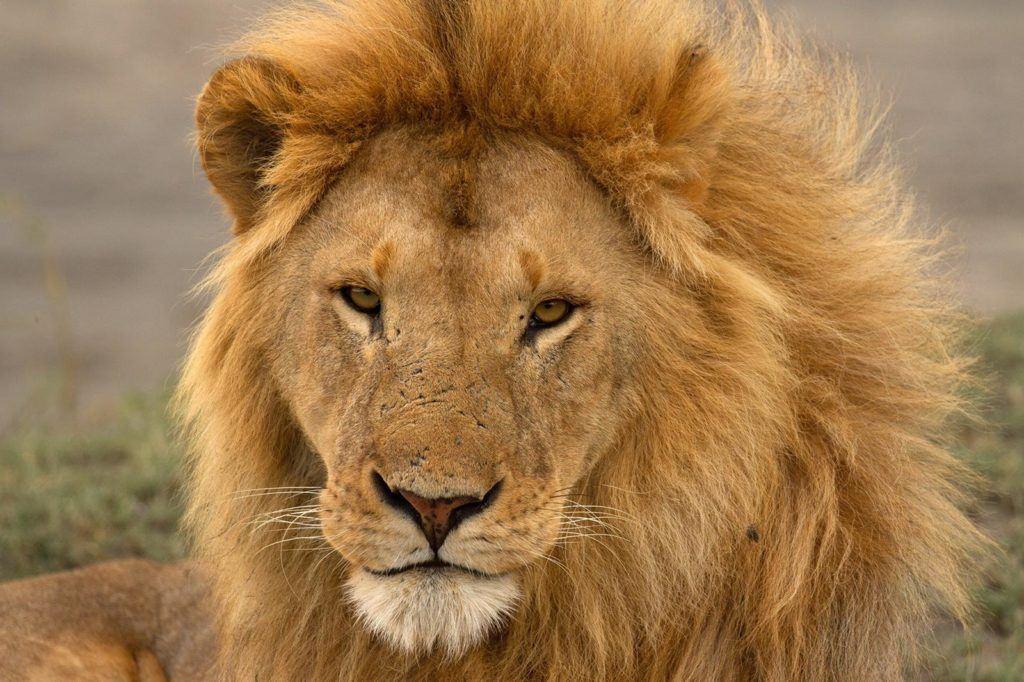 African People & Wildlife_Laly Lichtenfeld