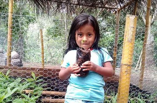 Fundación Rapaces y Bosques de Panamá