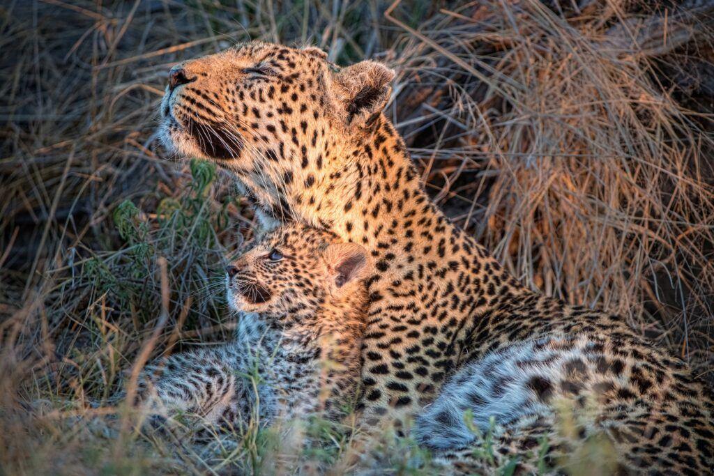 leopard_mother_cub