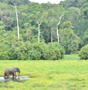 Poachers Turned Wildlife Defenders in the DRC