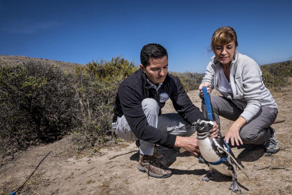GPS fieldwork at Pedral